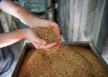 What Are The Common Strategic Career Moves In Brewing And Distilling?
